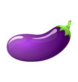 eggplant isolated vector image