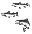 Set of trout silhouettes vector image