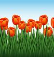 orange tulips vector image vector image