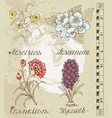 design set with hand drawn flowers vector image