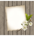 Blank paper with blossoming cherry branch vector image vector image