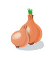 onion isolated vector image