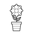 potted flower plant decoration botanical flora vector image