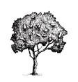 tree graphics vector image
