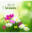 summer wild flowers background vector image