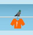 bad pigeon bird shit on t-shirt vector image