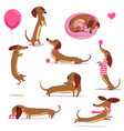 set with cute cartoon dachshund vector image