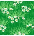 camomile field seamless background vector image vector image