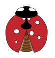 lady-bird or ladybug isolated on light white vector image