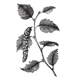 Paper Birch leaves engraving vector image vector image