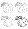 Set of four Hand Drawn Orange Fruits vector image
