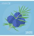 juniper flat design icon vector image