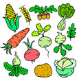 collection stock of vegetable various doodle set vector image