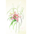 watercolor lily vector image