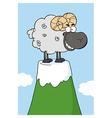 Sheep on a mountain vector image
