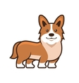 Welsh Corgi Pembroke Cartoon Style vector image