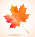Orange watercolor painted autumn maple leaf vector image