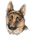 German Shepherd 02 vector image