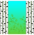Birch background vector image vector image