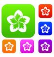frangipani flower set collection vector image