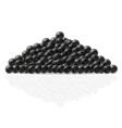 caviar 02 vector image vector image