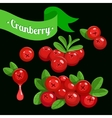 colorful branch of Cranberry 3 vector image