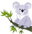 Koala on a Tree vector image