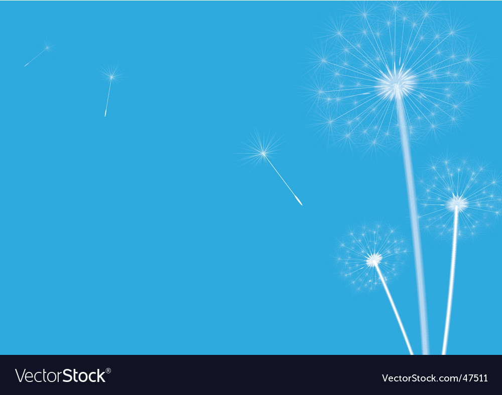 Dandelions blue vector