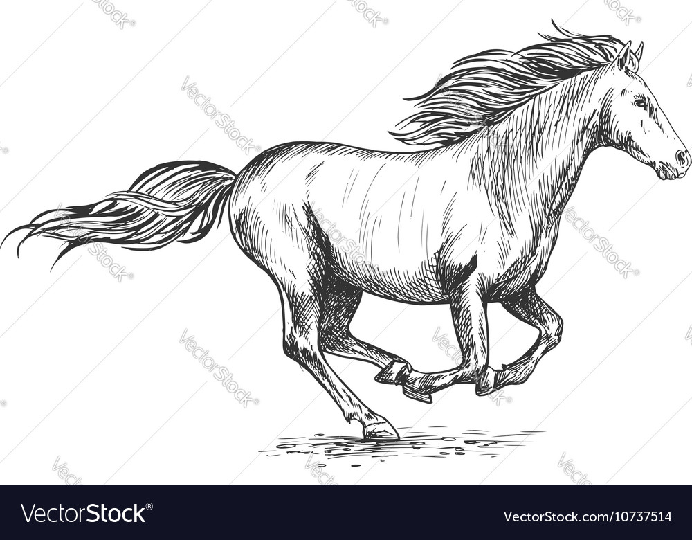 Running gallop white horse sketch portrait vector