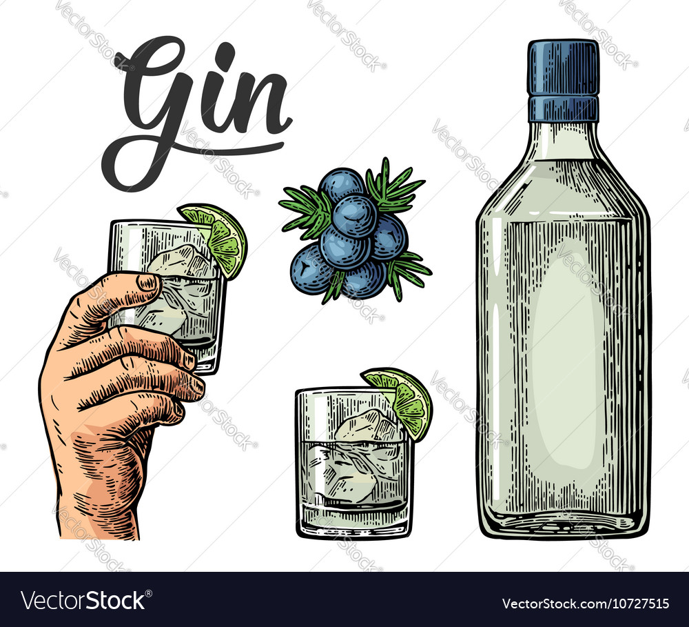 Glass and bottle of gin and branch of juniper with vector