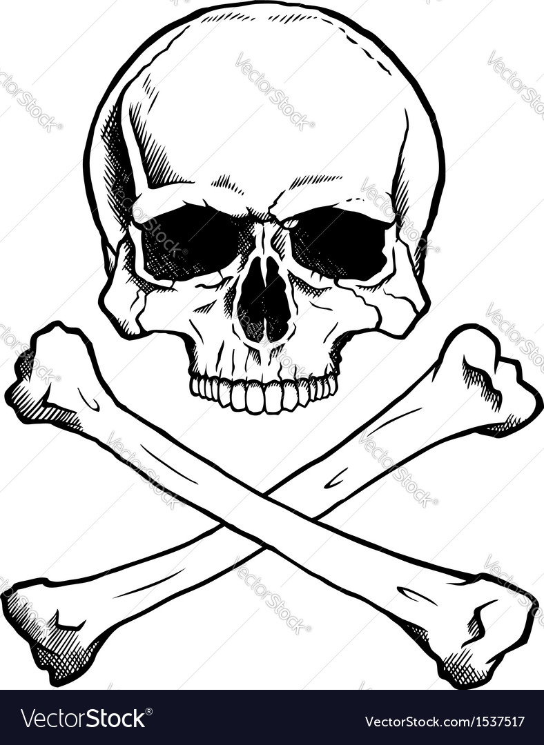 Blackwhite human skull and crossbones vector