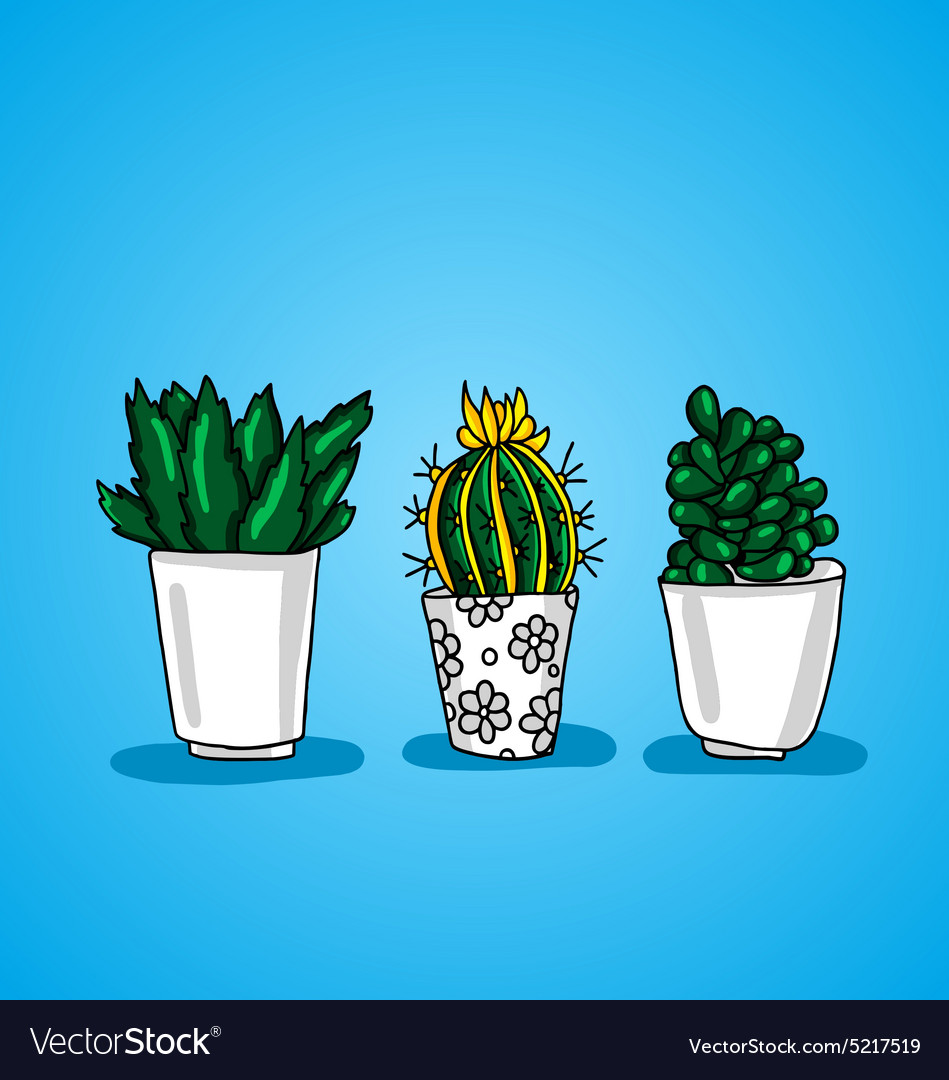Three decorative potted cactus vector
