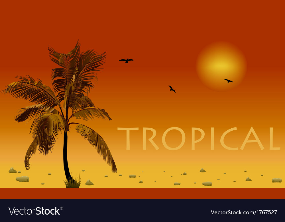 Sea and coconut palm sunset vector