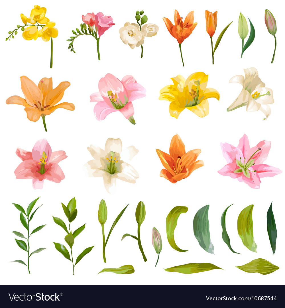 Vintage lily and rose flowers set watercolor style vector