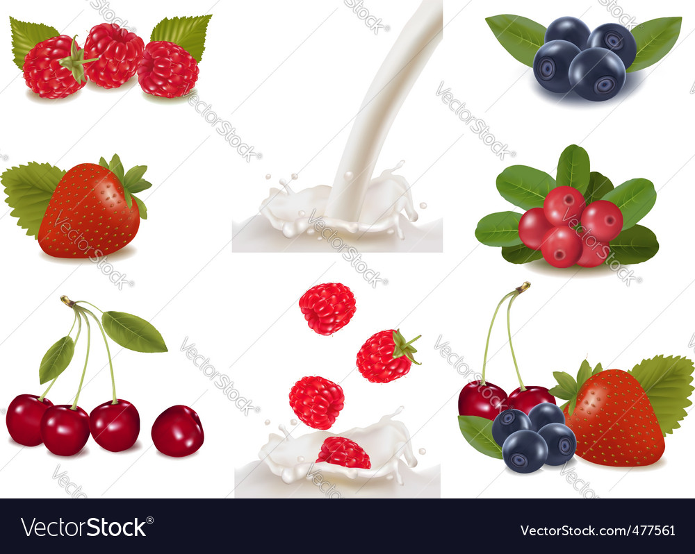 Berries and milk vector