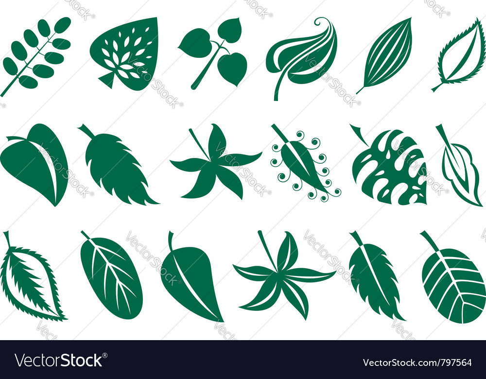 Leaves collection vector