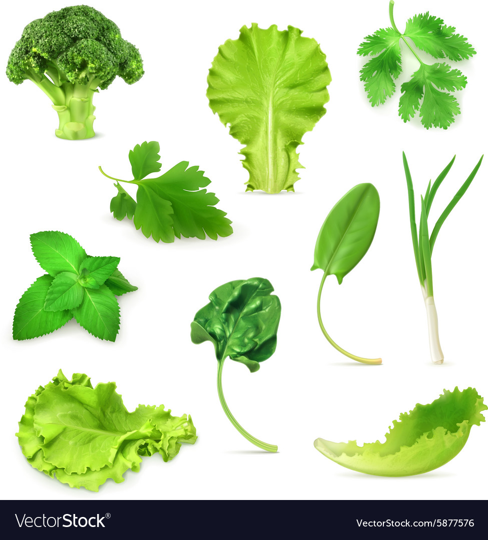 Green vegetables and herbs set organic vegetarian vector