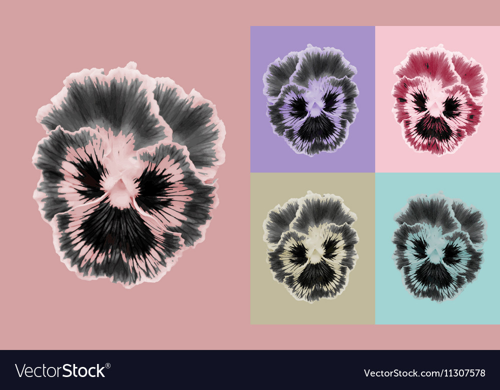 Pansies flower set vector