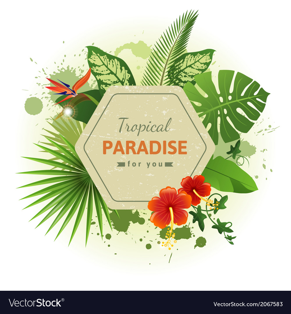 Tropical background7 vector