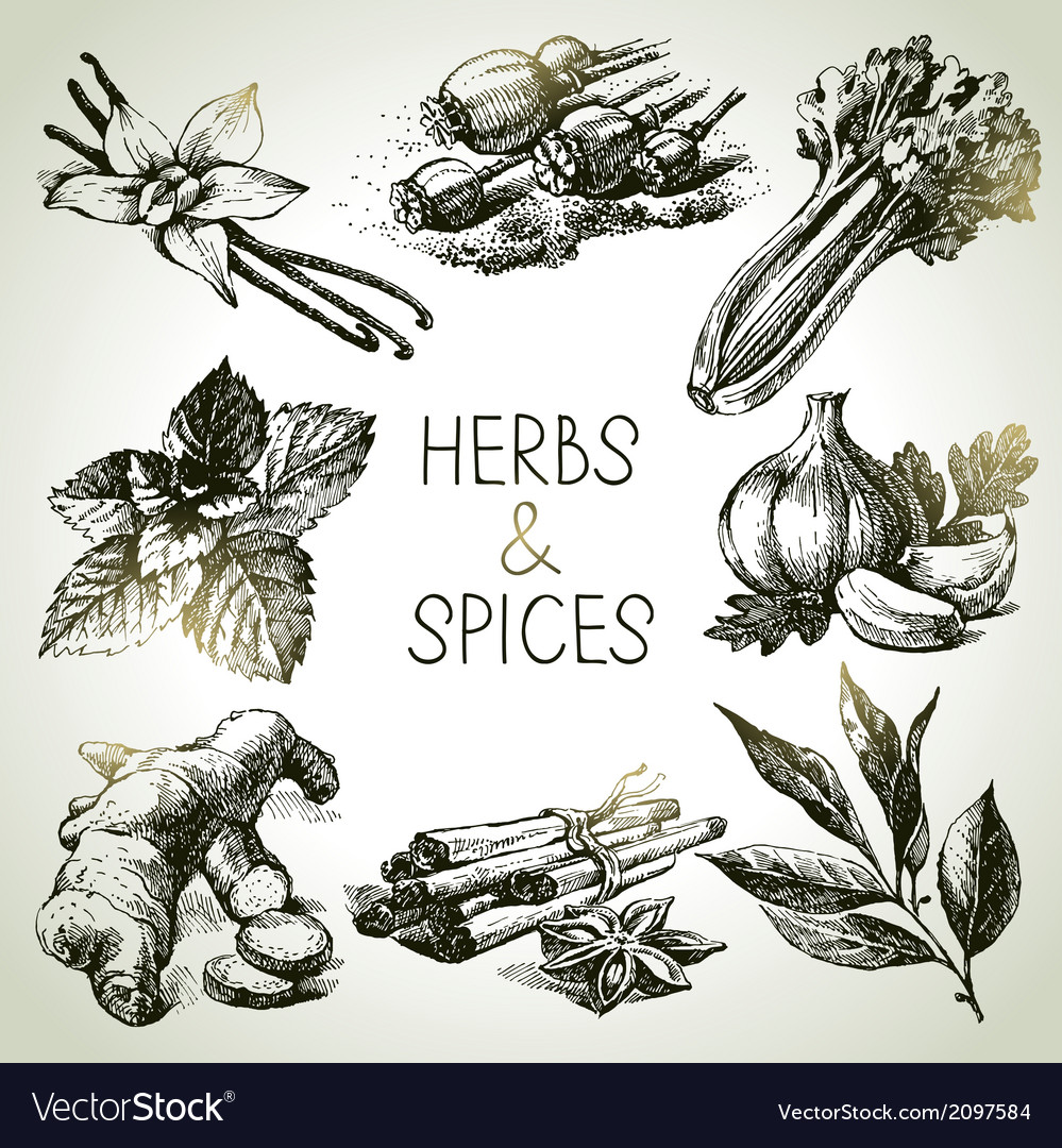 Kitchen herbs and spices vector