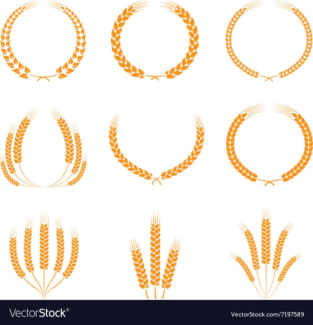 Wreaths of ears set vector
