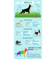 Dogs Breed Infographics vector image
