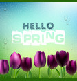 spring background with purple tulips flowers vector image