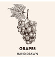 Sketch grapes cluster with a leaf Hand drawn vector image