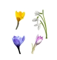 Set of Spring Flowers and Grass vector image