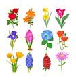 beautiful watercolor flower botanical bloom vector image