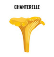 chanterelle yellow fungus isolated on white vector image
