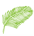 Palm leaves Tropical jungle plant vector image