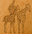 three giraffes vector image