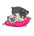 cute pugs isolated on white background vector image